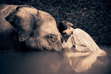 Elephant+Girl