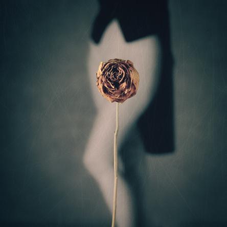 500px-Rose1